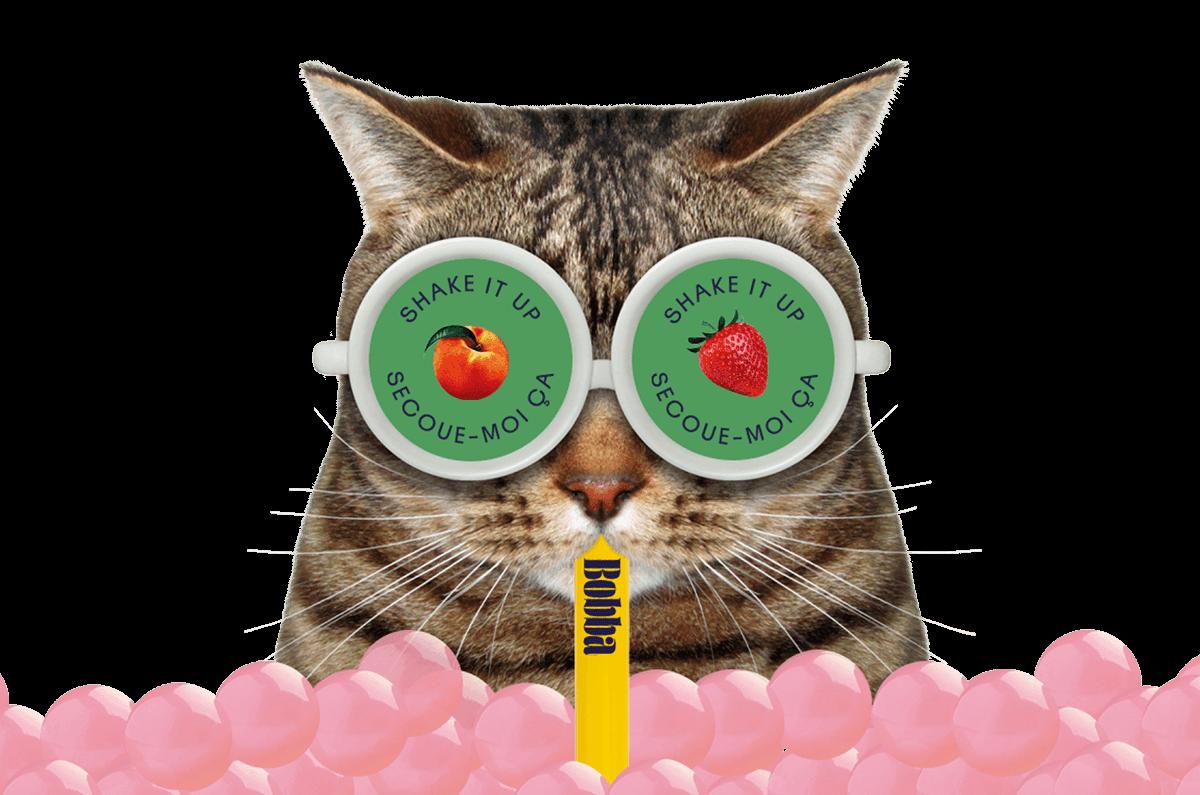 bobba-chat-lunettes-produit-secoue-moi-ca